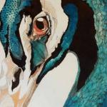 Nuove piume, un racconto di C. Francioni || Three Faces