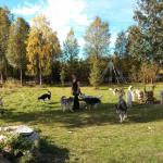 Autostop – Viaggio in Lapponia, Atto II – V.Bonfanti