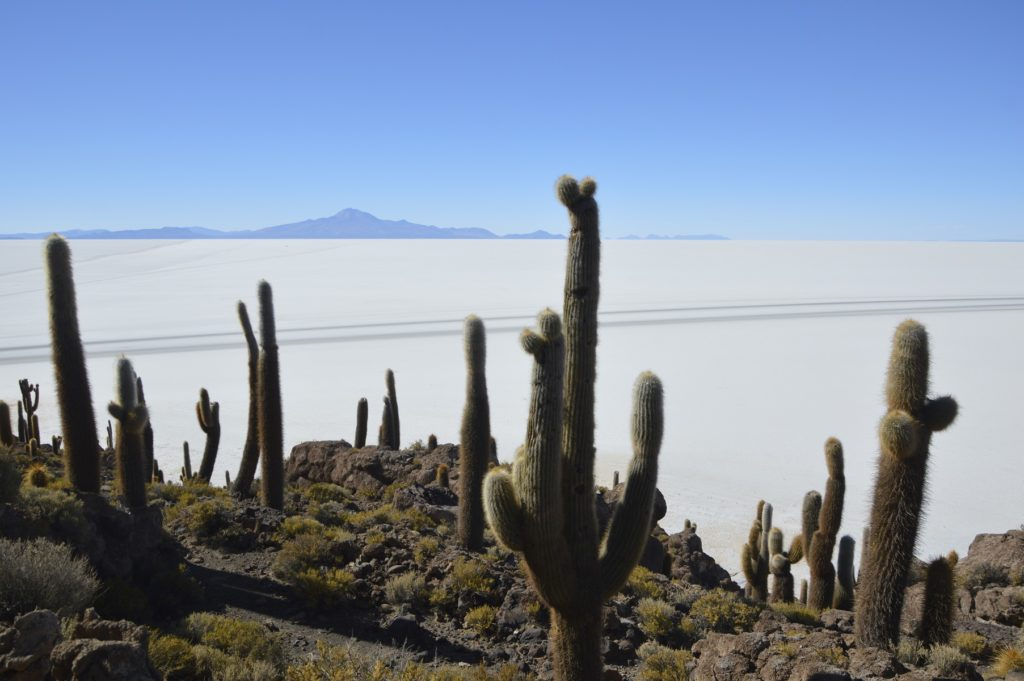 Salar  Incahuasi Bolivia